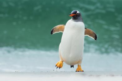 10 kníh, pre milovníkov tučniakov